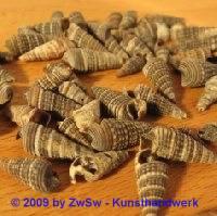 Spitzmuscheln 15 Gramm