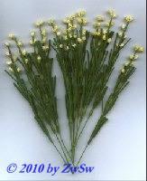 Flowergras 1 Bund