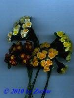 Thymian-Blüte mit Blatt, weiß