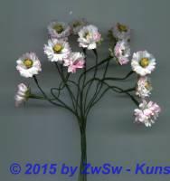 Gänseblümchen mit roten Blütenspitzen