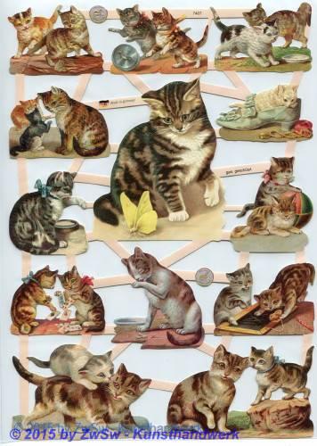 Spielende Katzen ohne Glimmer