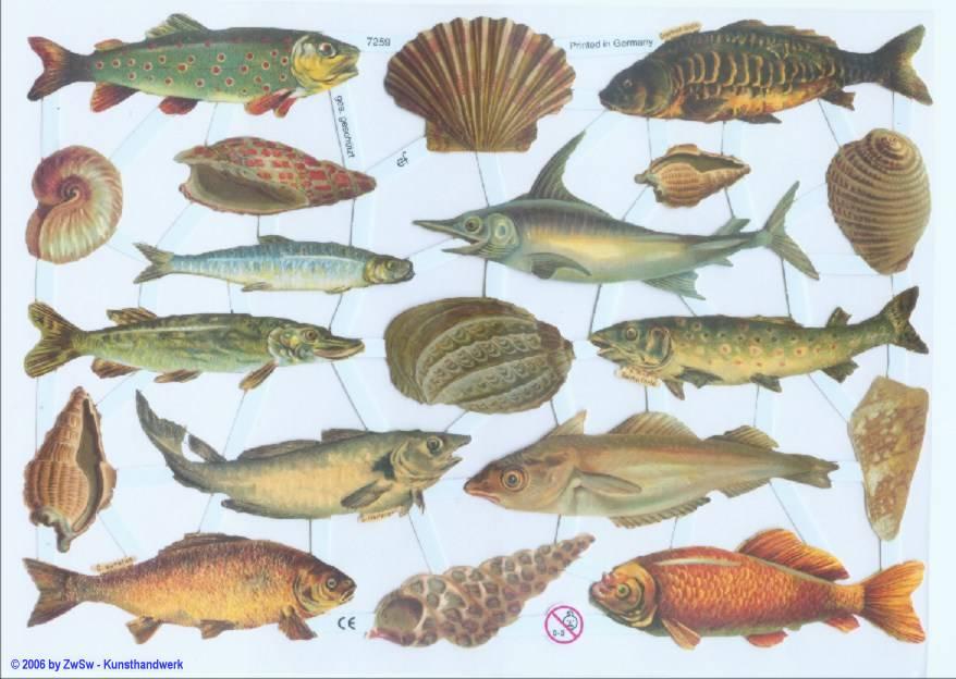 Glanzbild Fische