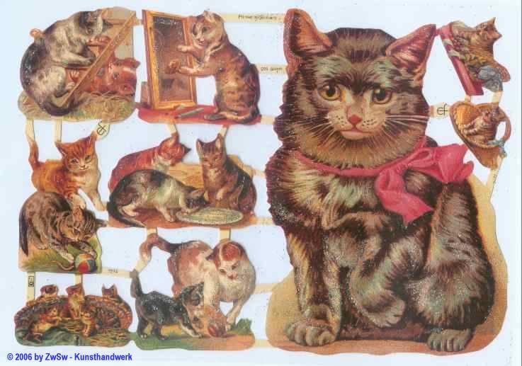 Glanzbild Katzen