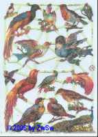 Glanzbild Paradiesvögel ohne Glimmer