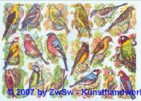 Glanzbilder Vogelwelt ohne Glimmer