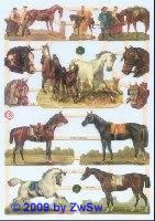 edle Pferde ohne Glimmer
