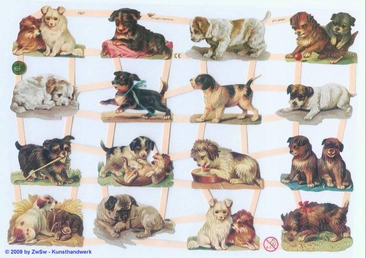 Hundewelpen ohne Glimmer