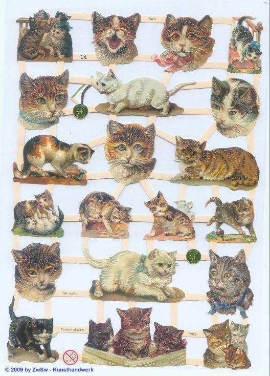 verspielte Katzen ohne Glimmer