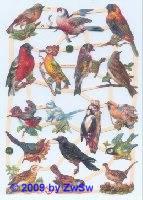 einheimische Vögel ohne Glimmer