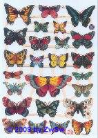 Schmetterlinge ohne Glimmer