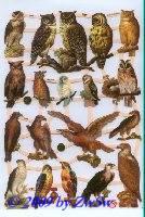 Greifvögel ohne Glimmer