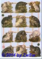 Ratten ohne Glimmer
