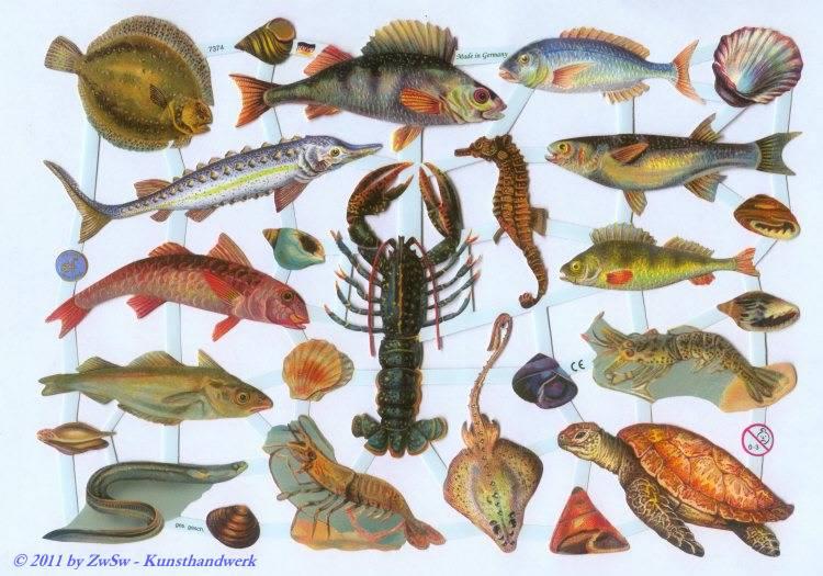 Meeresbewohner ohne Glimmer