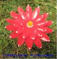 Wachsblume rot