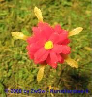 Wachsblume rot klein